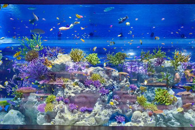 様々な角度から沖縄の海を楽しもう!