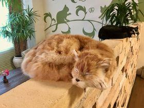 1室限定の猫グッズルームも!大阪・石切温泉「ホテルセイリュウ」