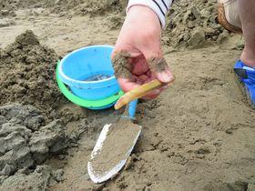 塩をかけたら飛び出す!「姫路・的形潮干狩場」のマテ貝採りが面白い