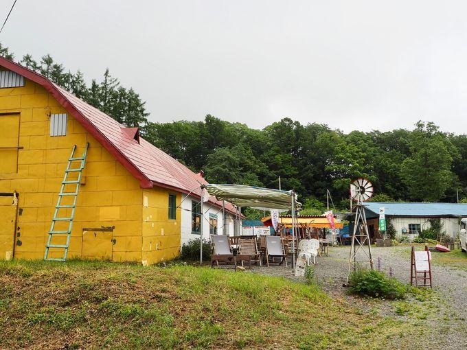 さくらんぼの季節は北海道の夏のはじまり