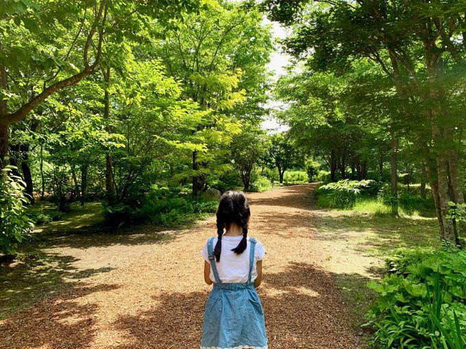美しい森の庭園で「なつ」の気分になってみよう