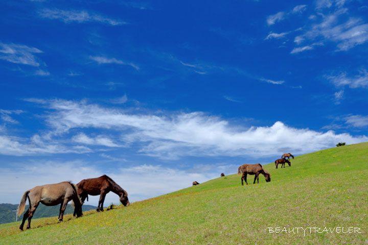 2日目昼:少し足を延ばして野生馬を見に行こう