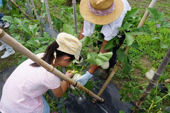 珍しい野菜の収穫体験ができる農園も
