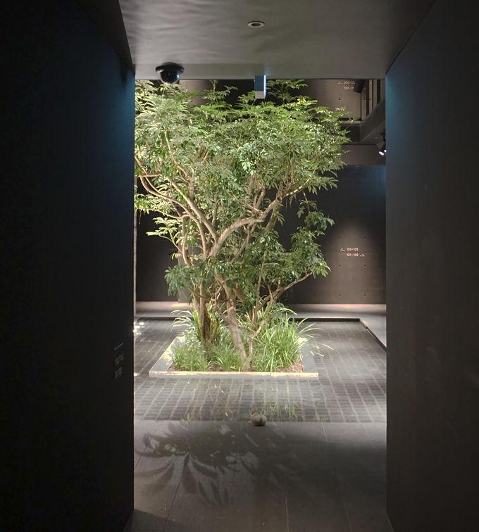 京都の日本酒造「キンシ正宗」の町屋を改修