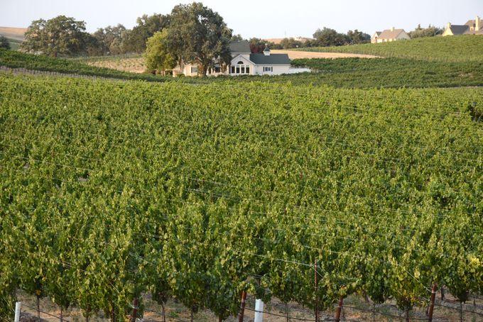 ブドウ畑が目の前のワイナリーリゾート併設する「サマーウッドワイナリー」