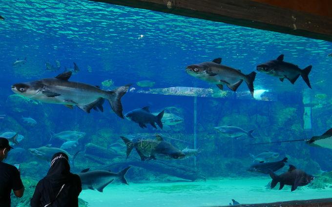 世界の大河をテーマに淡水生物が見られるリバー・サファリ
