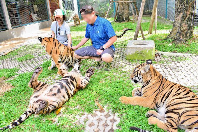 パタヤの大人気観光スポット「タイガーパーク」