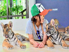 もふカワな赤ちゃんトラに触れあえる パタヤ「タイガーパーク」