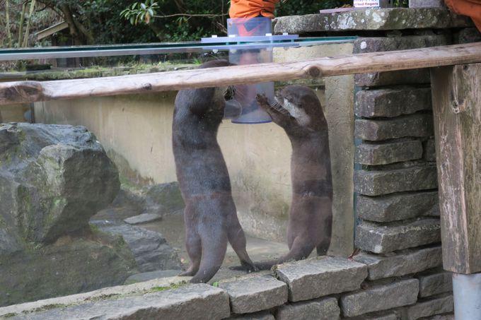 動物たちがのびのびと暮らす生態展示