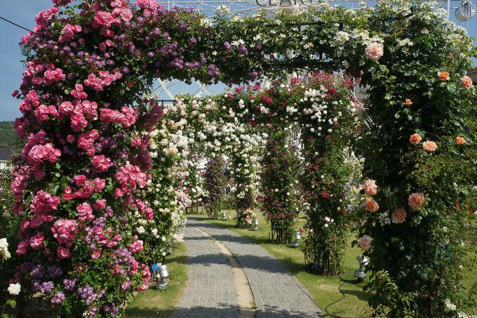 100万本のバラ祭