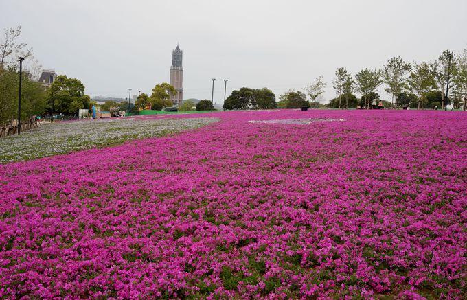 九州最大級の芝桜ガーデンも必見!