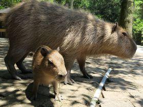 カピバラの聖地「長崎バイオパーク」ワクワクの餌やり体験が楽しい!