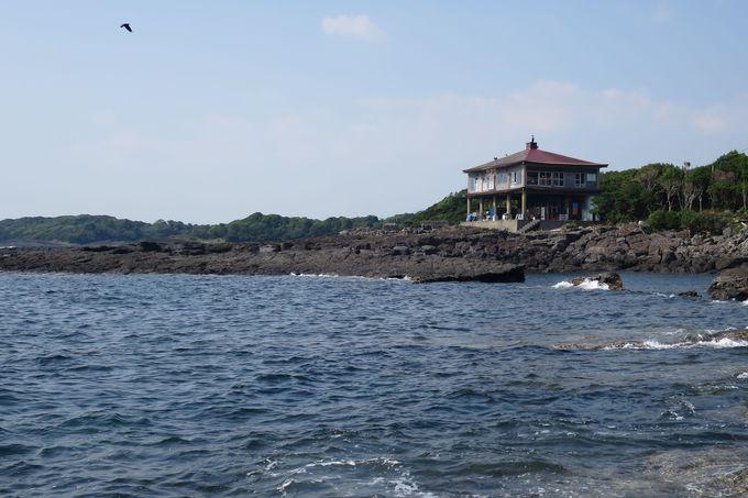 日本で唯一のタツノオトシゴ観光養殖場