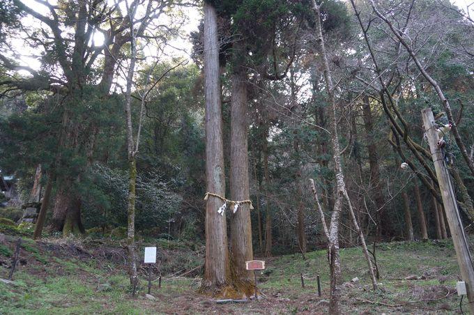 夫婦杉や縁結びの木「なぎの木」も参拝しよう!