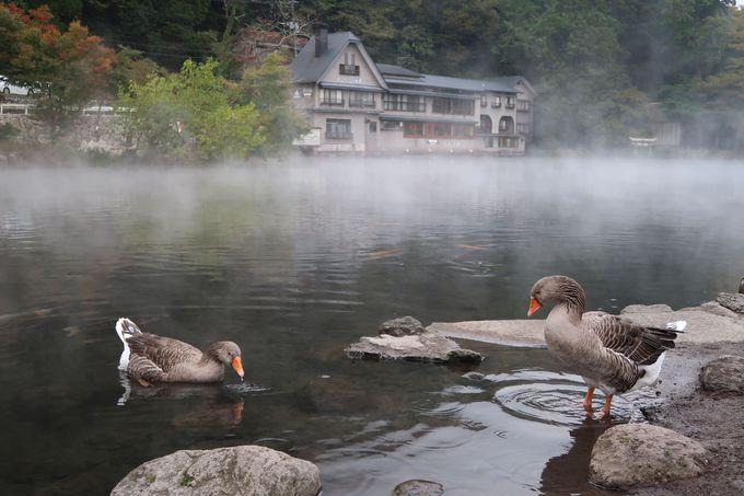 湯布院を代表する観光スポット「金鱗湖」