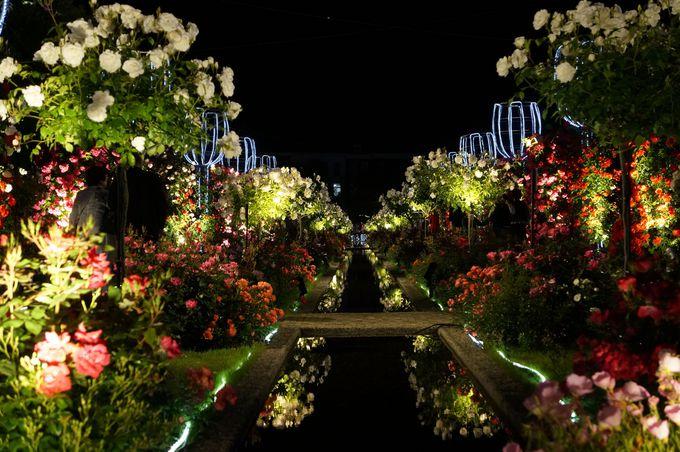 夜の散策、バラのホテル「ホテルヨーロッパ」へ