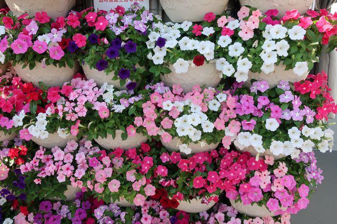色とりどりの花がお出迎え「ウェルカムゾーン」
