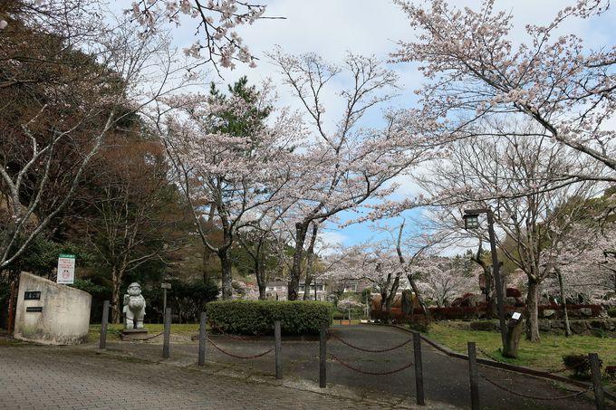 四季折々の風景が楽しめる三島公園は桜の名所