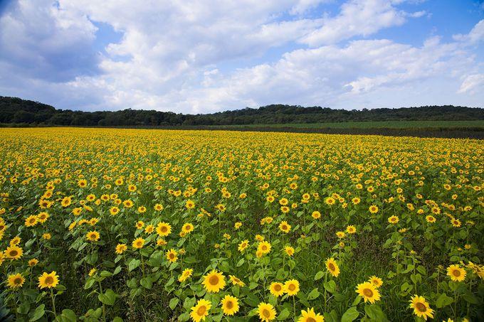 北の大地で自然体験!「北海道箱根牧場」で酪農やバター作り