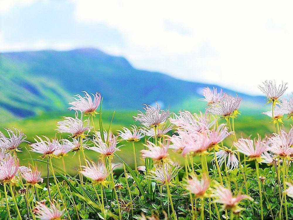 感動!周辺に広がるどこまでも続く天空のお花畑