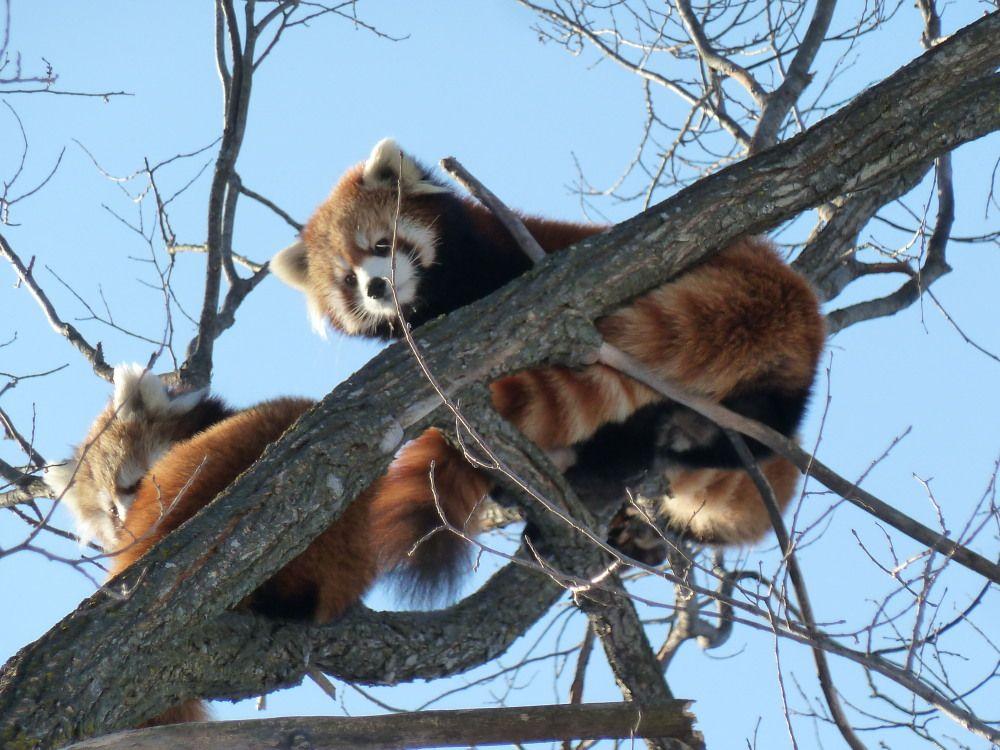 元気な動物達が待っている!どの季節も楽しい「円山動物園」