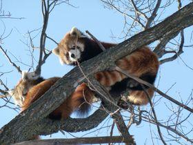冬も元気な動物達が待っている!雪の季節も楽しい「円山動物園」