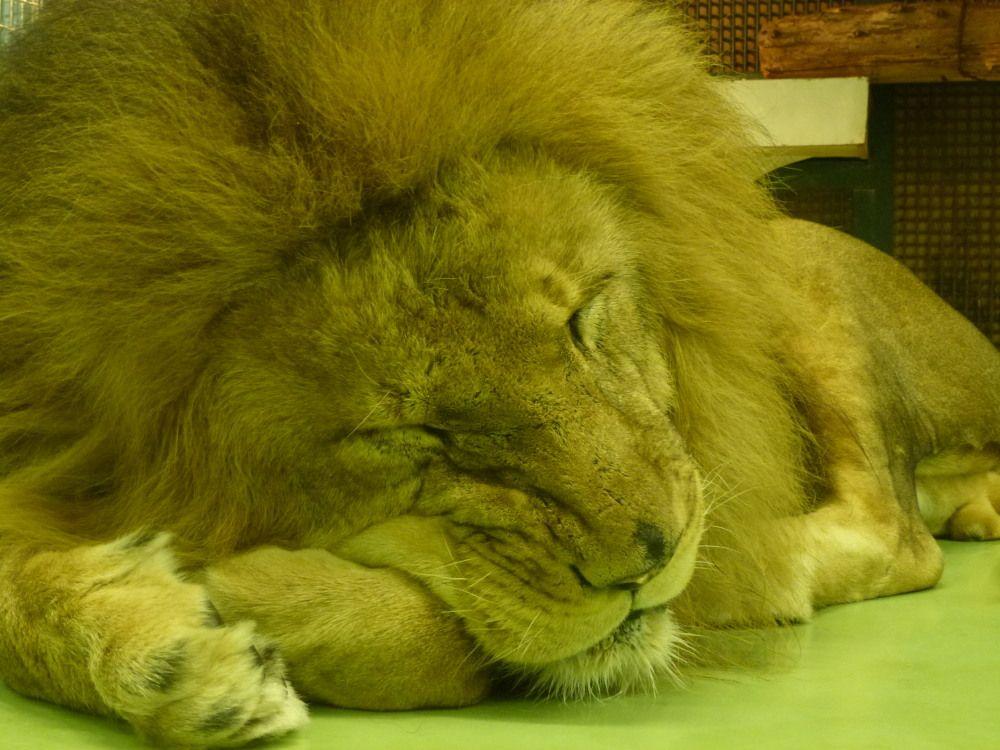 冬の円山動物園は暖かい地方の動物達も至近距離で観察可能!