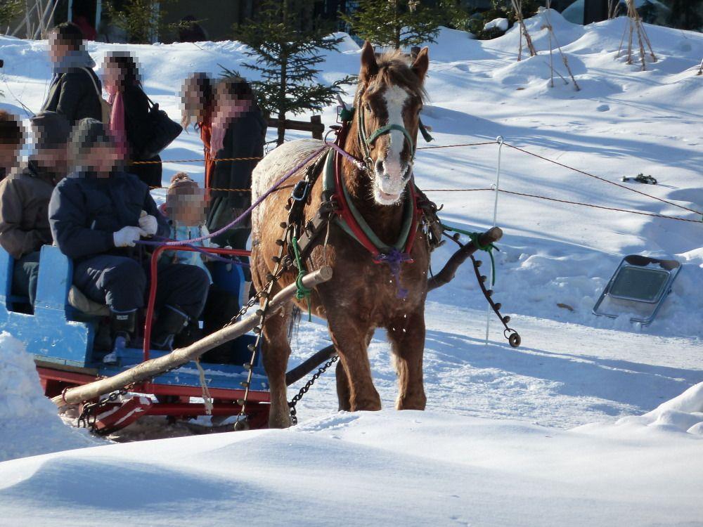 冬の円山動物園来場時はイベントのチェックも忘れずに!