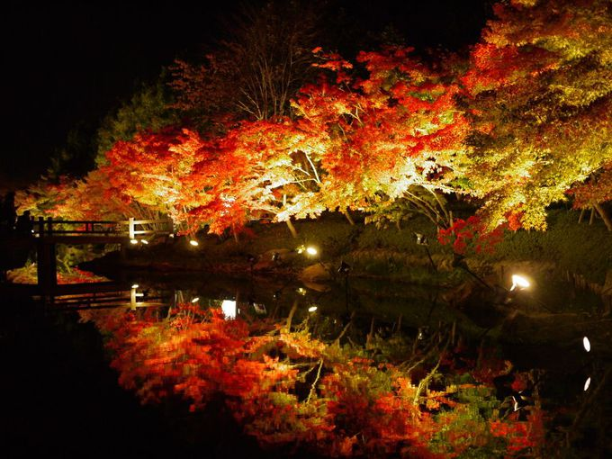 紅葉のライトアップが美しい鏡池