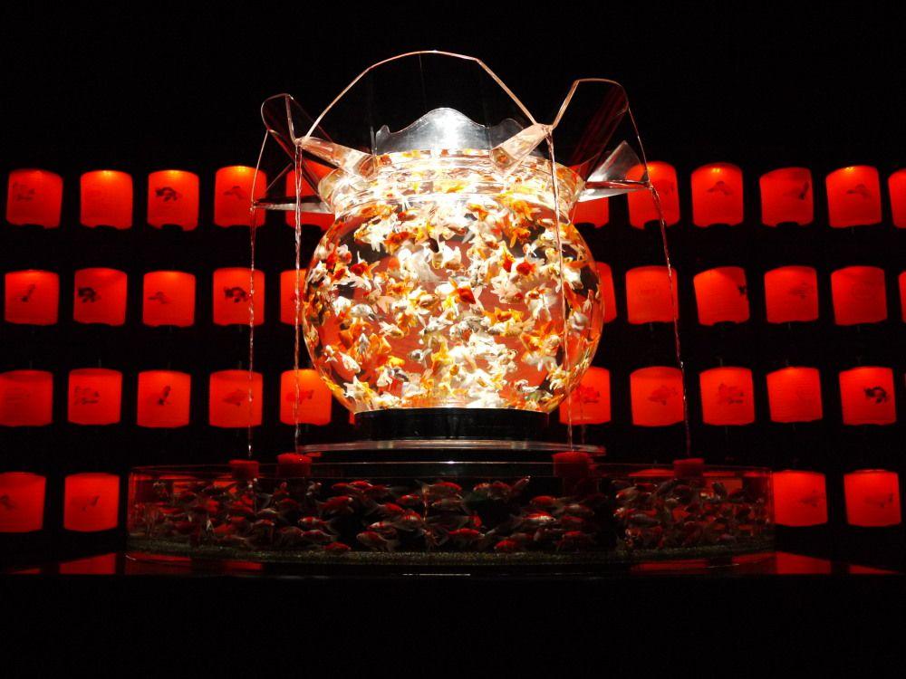 世界最大級の金魚鉢は江戸の遊郭、乱舞する1000匹の金魚!