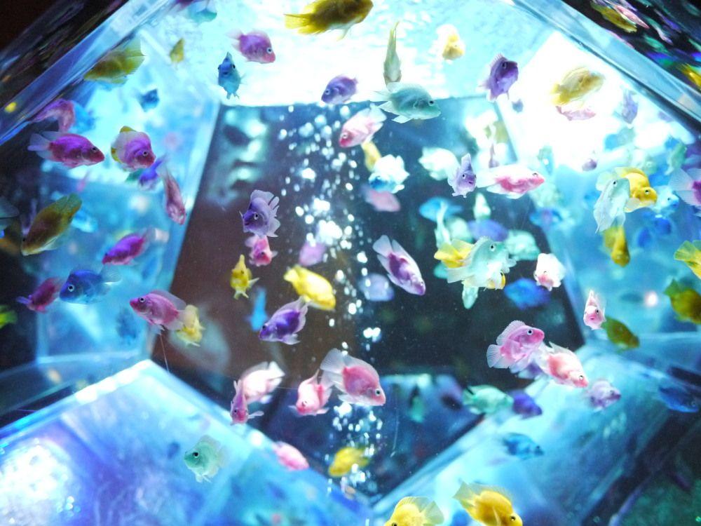 魅力的☆かわいいパステルカラーの熱帯魚!