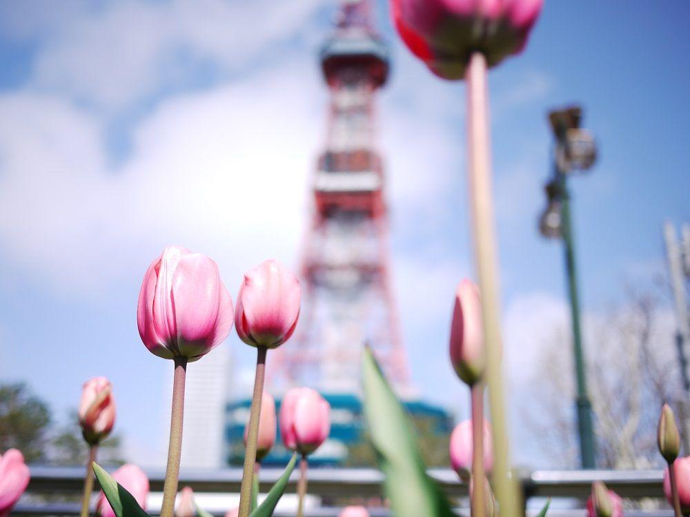 3位 札幌(北海道)