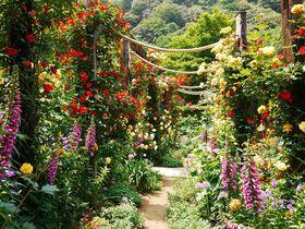 バラに染まる熱海観光!初夏の「アカオハーブ&ローズガーデン」