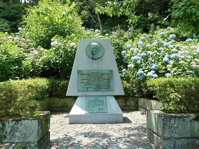 咲き乱れるあじさいとカーター大統領下田来訪の記念碑