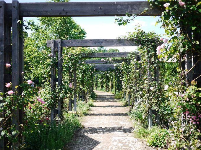バラのアーチを抜けて銀河庭園を巡ろう