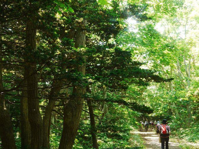自然いっぱいの焼尻島でハイキングを楽しもう!