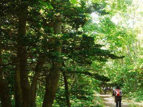 オンコの原生林と牧場風景の中をハイキング!北海道「焼尻島」