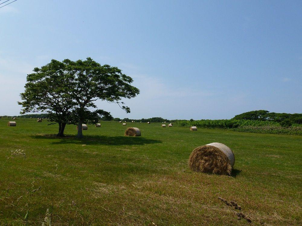 これぞ北海道!どこまでも続く牧草地帯を歩こう!