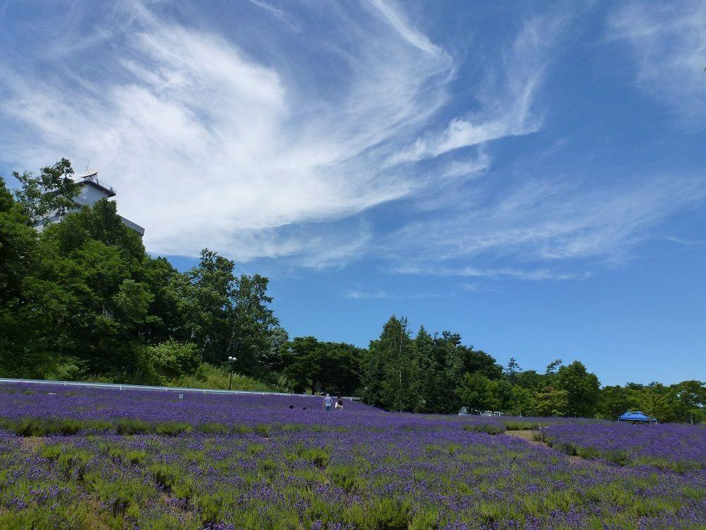 ラベンダーの歴史と「東海大学札幌キャンパス」