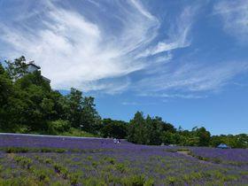 日本ラベンダー栽培発祥の地はココ!東海大学札幌キャンパス