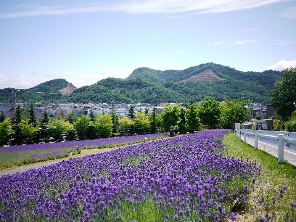一面ラベンダー畑が広がる美しきキャンパス