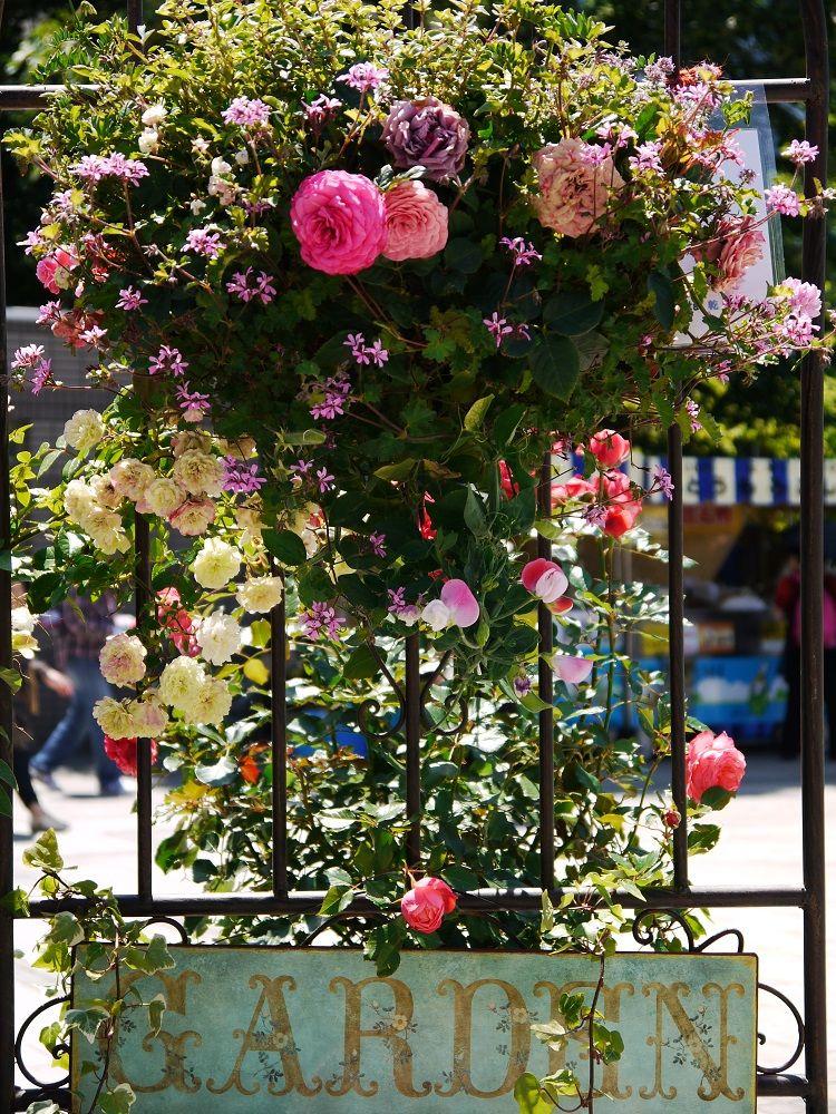 「花フェスタ」で、もっとバラを楽しもう!