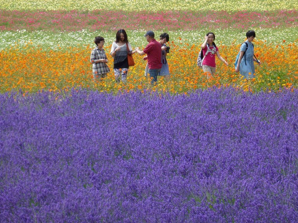 お花畑の中を歩こう!