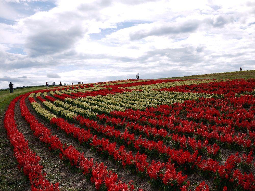 パッチワークのような、丘の上に広がるお花畑