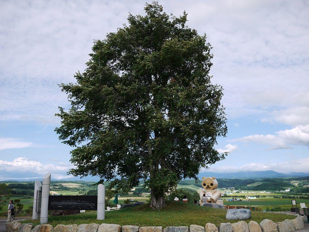 富良野盆地開拓発祥の地にそびえる「伝承の楡(にれ)」