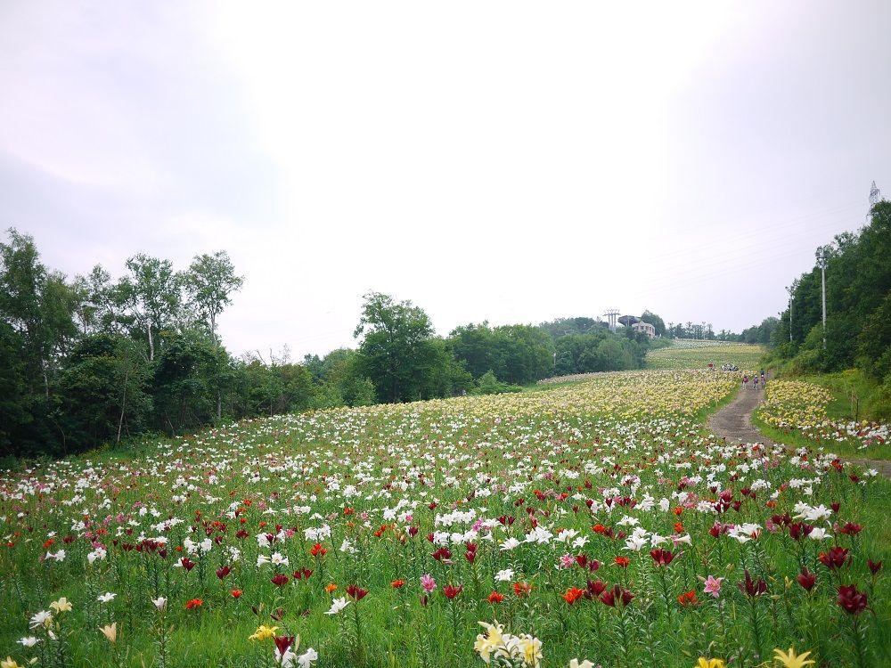 ユリの楽園!新たな観光スポット「オーンズ春香山ゆり園」