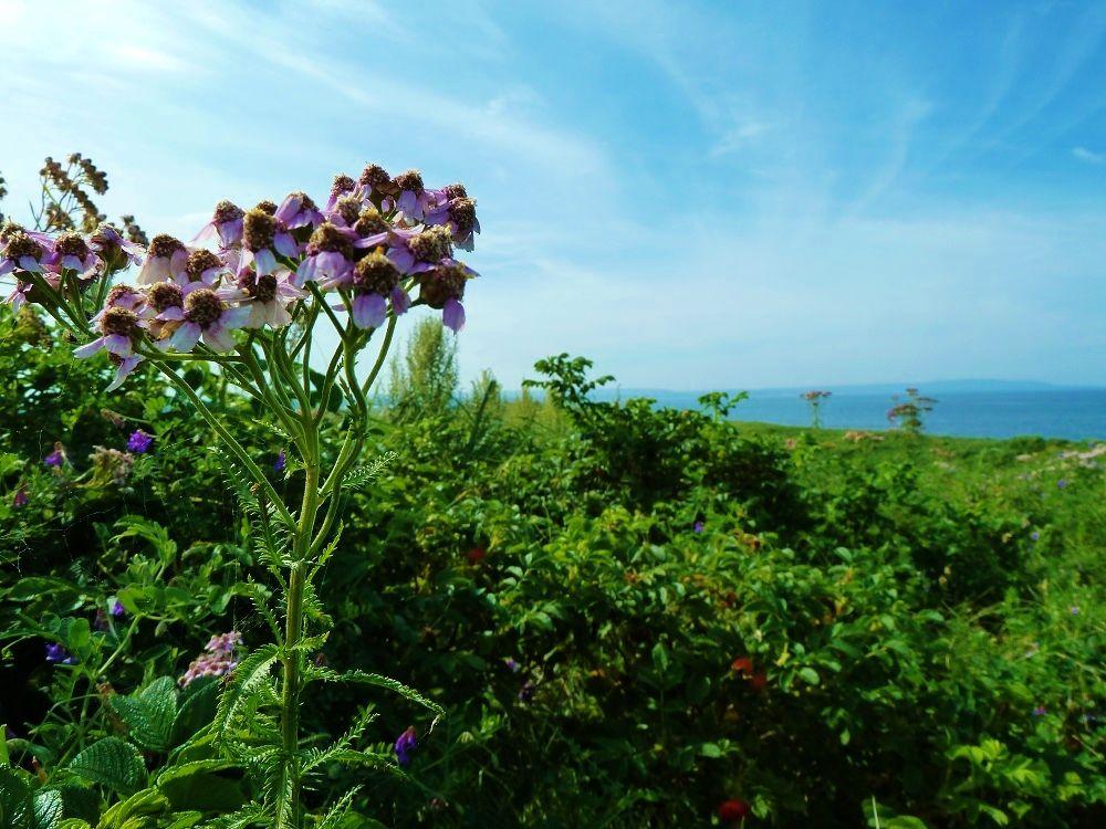 見頃は夏!草原に広がるお花畑!北海道「小清水原生花園」