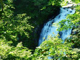 北海道知床の原生林を気軽にトレッキング!羅臼「熊越の滝」