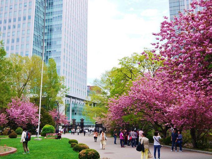 春は華やかな八重桜の名所