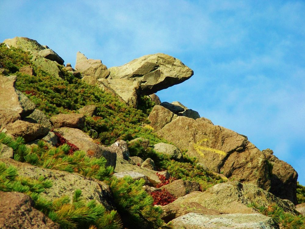 ナキウサギの声が聞こえる緑岳の登山道